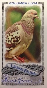 2014 Topps Allen & Ginter Baseball Cards 44