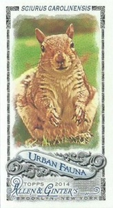 Unannounced 2014 Topps Allen & Ginter Baseball Mini Insert Guide 11
