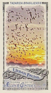 Unannounced 2014 Topps Allen & Ginter Baseball Mini Insert Guide 18