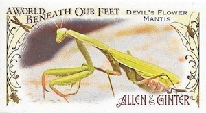 2015 Topps Allen & Ginter Baseball A World Beneath Our Feet Mini