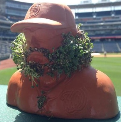 2015 Jayson Werth Chia Pet Beard